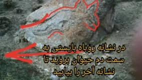 فرید باقری - نشان روباه