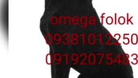 نمونه های مخمل پاشی شده /دستگاه مخمل پاش 09385324434