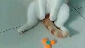 اخه گربه به این بامزگی دیده بودین