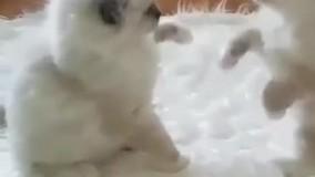 دعوای گربه ها عالیه