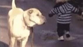 محافظت سگ ازبچه