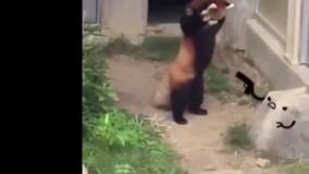 کلیپ فوق العاده خنده دار و جالب از حیوانات (قسمت اول)
