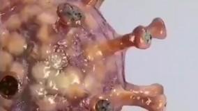 تصویری سه بعدی و بزرگ شده از ویروس کرونا