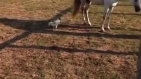 ویدئویی از یک اسب بیاعصاب