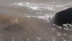 حال خوش دریاچه ارومیه بعد از بارش باران