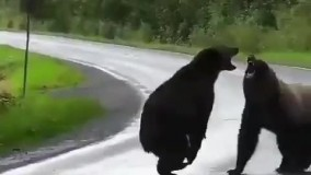 با مسابقات کشتی فرنگی خرسها آشنا شويد