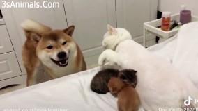 وقتی گربه های مادر از بچه هاشون محافظت میکنن