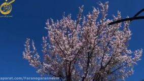 روز درخت کاری فرانگران