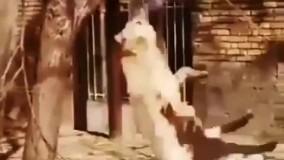 دار زدن یک سگ توسط دو انسان وحشی