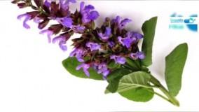 درمان گرگرفتگی با گیاهان دارویی