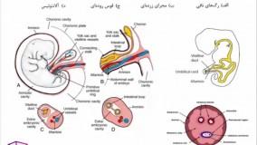 جنین شناسی، آزمون ارشد علوم تشریحی 98