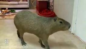 چند مورد از بزرگترین حیوانات جهان - حیوانات غول پیکر