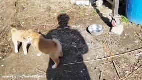 دعوای توله سگ ها