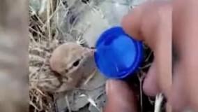 آب دادن به یک پرنده بعد از آتش سوزی