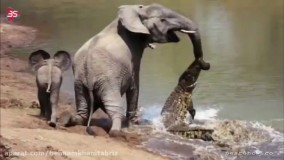 10 صحنه باورنکردنی از کمک حیوانات به همدیگر