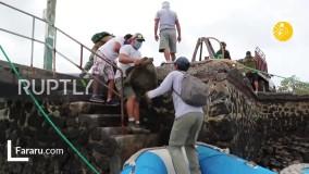 بازنشسته شدن لاکپشت ۱۰۰ سالهای که ۸۰۰ بچه به دنیا آورد!