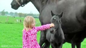کره اسب های بسیار زیبا با مادرشان