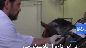 پلاسمای اسب میتواند در مقابله با کرونا موثر باشد