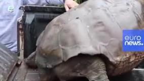 روز خوش حیات وحش؛ لاکپشت صد ساله در طبیعت رها شد