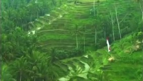 تور ابود در جزیره بالی (جزیره خدایان) اندونزی