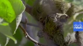 تولد نوزاد ۱۵گرمی در باغ وحش اتریش