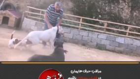 درگیری ناگهانی سگها