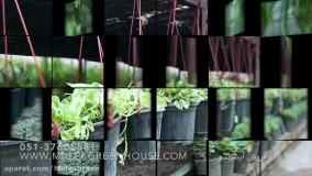 فروشگاه آنلاین گل و گیاه