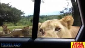 مستند حیوانات وحشی
