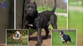 هشت تا از خطرناک ترین نژاد سگ ها در جهان!
