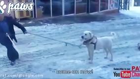 دفاع سگ از دوستش  در برابر فردی که به او لگد میزند