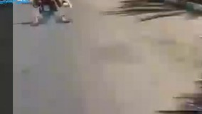 موتور سواری شتر !!!!