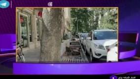 برکناری آقای شهردار به دلیل قطع درختان