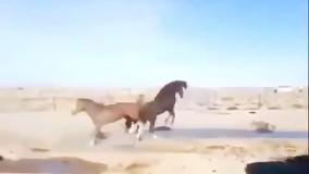 کشتی کج اسب ها با حضور جان سینا