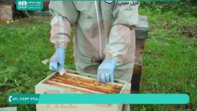 آموزش تولید ملکه ی زنبور به روش طبیعی