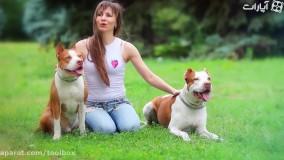 10تا از دونده ترین نژاد سگها