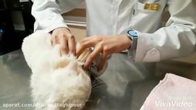 آموزش نظافت حیوانات خانگی برای جلوگیری از انتقال کرونا