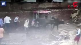 لحظه وحشتناک حمله گاو به کودک خردسال