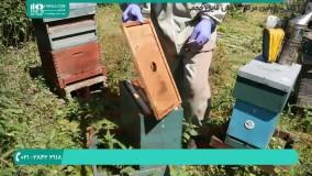 آموزش زنبور داری و اصول پرورش زنبور عسل