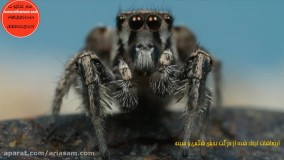 رفتار عنکبوت های جهنده - سم ریشه کن کننده عنکبوت