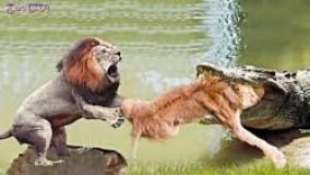 مستند حیات وحش نبرد فیل با کرگدن!