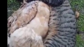 درد و دل گربه با مرغ...پربازدید ترین کلیپ آپارات