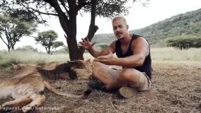 ببینید این مرد چجوری با شیرها زندگی میکنه
