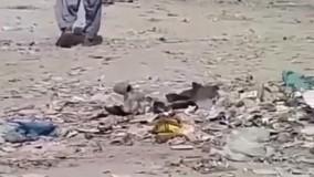 سرقت مسلحانه در بلوچستان