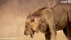 پیروزیی شجاعت بر ترس