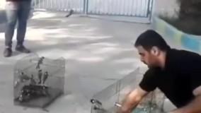 رها سازی دهها بلبل خرما توسط دو جوان آبادانی