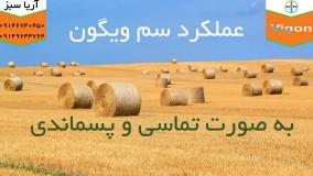 علف کش 100 درضد تضمینی برای مزارع گندم و جو | Vigon