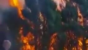 ببینید چگونه یک آتش کوچک به کمک باد یک جنگل سبز را به خاکستر تبدیل می کند
