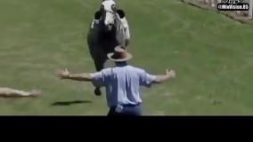 برخورد شدید اسب رم کرده با مربی
