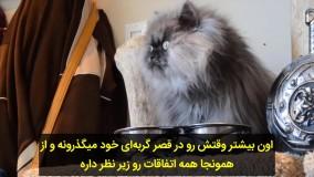 رکورد گینس بلندترین موی گربه برای کلنل میو