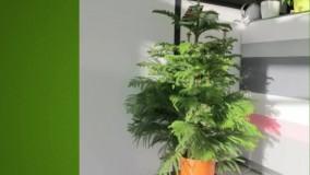 راهنمای خرید گیاهان آپارتمانی